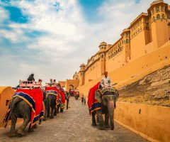 Best way to reach the amer fort is on an elephant