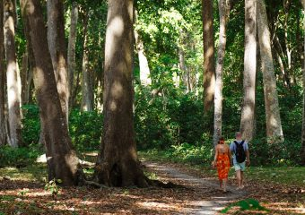 Nature Walk through the forest to beach in Andamans - India
