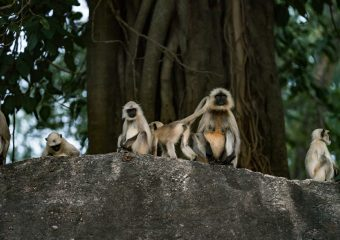 Wildlife in Pench National Park - National Parks of Central India - Madhya Pradesh -India